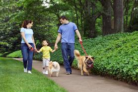 family-counseling-fairfax-va